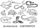 set of reptiles and amphibians. ...   Shutterstock .eps vector #1085580929