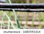 drip irrigation system close up.... | Shutterstock . vector #1085592314