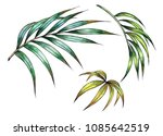 palm leaves  watercolor hand... | Shutterstock . vector #1085642519