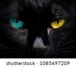 the eyes of a black cat are... | Shutterstock . vector #1085697209