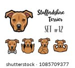 staffordshire terrier dog.... | Shutterstock .eps vector #1085709377