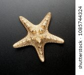 Gold Sea Shell  Starfish ...