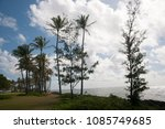 Small photo of Palm trees grow on the Pacific Shore at Kapaa Shores on the Island of Kauai, Hawaii.