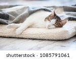 cat sleeping at home. pet under ... | Shutterstock . vector #1085791061
