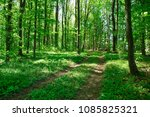 forest trees. nature green wood ... | Shutterstock . vector #1085825321