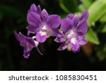 Small photo of Purple orchids are beautiful flowering bouquet, Grows fast, grows fast, grows fast and grows throughout the year.