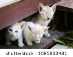 Stock photo three adorable kittens sleeping together cute little cat concept 1085833481