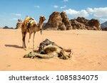 Wadi Rum  Jordan   June 13 ...