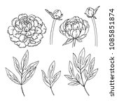 vector contour peony rose... | Shutterstock .eps vector #1085851874