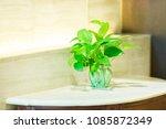 golden pothos tree in the glass ... | Shutterstock . vector #1085872349