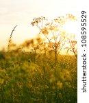 autumn grassy meadow at sunset | Shutterstock . vector #108595529