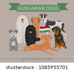 dogs by country of origin.... | Shutterstock .eps vector #1085955701