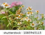 a lizard in the flower garden. | Shutterstock . vector #1085965115