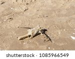 dead fish on the sand beach.... | Shutterstock . vector #1085966549