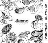 mushroom hand drawn vector...   Shutterstock .eps vector #1085987435