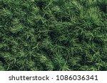 Full Frame Image Of Pine Tree...