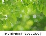 fresh green image | Shutterstock . vector #108613034