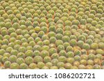 many lined with potted cactus  | Shutterstock . vector #1086202721