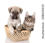 Stock photo cat and dog in basket isolated on white background 108620315