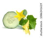 fresh  nutritious  tasty green... | Shutterstock .eps vector #1086241619