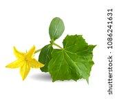 fresh  nutritious  tasty... | Shutterstock .eps vector #1086241631