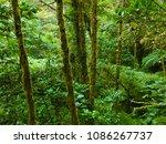 costa rica rainforest | Shutterstock . vector #1086267737