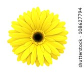 Yellow Daisy Flower Isolated On ...