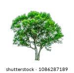 shrubs beautiful bush isolated  ... | Shutterstock . vector #1086287189
