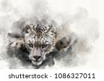 mixed media digital painting of ... | Shutterstock . vector #1086327011