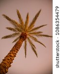 large palm tree | Shutterstock . vector #1086354479