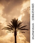 silhouette of a palm tree | Shutterstock . vector #1086354485