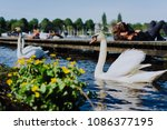 couple of grace white grace... | Shutterstock . vector #1086377195