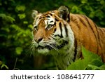 face of tiger with high... | Shutterstock . vector #108641777