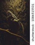 the lizard sits on a branch    Shutterstock . vector #1086515531