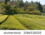 the side of a hill in south... | Shutterstock . vector #1086528335