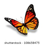 Stock photo yellow orange butterfly isolated on white background 108658475