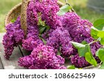 decoration with lilac   Shutterstock . vector #1086625469