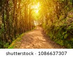 evergreen tropical oak trees... | Shutterstock . vector #1086637307