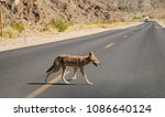 a lone coyote crossing the road ... | Shutterstock . vector #1086640124