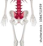 lower half length human... | Shutterstock . vector #1086711959