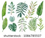 watercolor fresh leaves... | Shutterstock . vector #1086785537