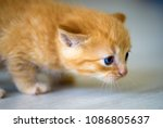 Stock photo cute little kitten 1086805637