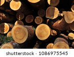 Timber Logs Partly In Shade An...