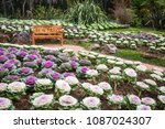 wood chair in the cabbage... | Shutterstock . vector #1087024307