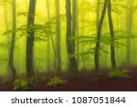 foggy and magic beech forest... | Shutterstock . vector #1087051844