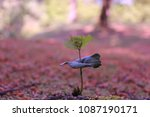 nice close up of a small ... | Shutterstock . vector #1087190171