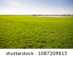 Small photo of Green field with the risen winter wheat and large puddle at the background