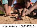 children play with a rhinoceros ... | Shutterstock . vector #1087247315