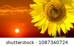 sunflower is a sunny flower. a... | Shutterstock . vector #1087360724