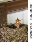 Small photo of Young bird in the nest.